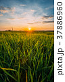 Spring Sun Shining Over Agricultural Landscape Of 37886960