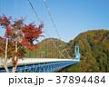 風景 竜神大吊橋 竜神峡の写真 37894484