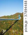 竜神大吊橋 吊橋 紅葉の写真 37894488