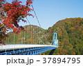 竜神大吊橋 吊橋 紅葉の写真 37894795