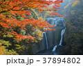 袋田の滝 37894802