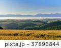 美瑛 風景 北海道の写真 37896844