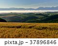 美瑛 風景 北海道の写真 37896846