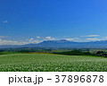 丘 美瑛 風景の写真 37896878