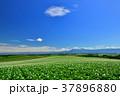 丘 美瑛 風景の写真 37896880