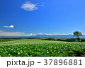 丘 美瑛 風景の写真 37896881