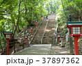 高尾山 男坂 薬王院の写真 37897362