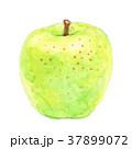 青りんご りんご フルーツのイラスト 37899072