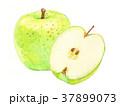 青りんご りんご フルーツのイラスト 37899073