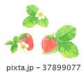 水彩 花 苺のイラスト 37899077