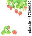 花 苺 果物のイラスト 37899080