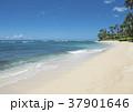 ハワイ ビーチ 砂浜の写真 37901646