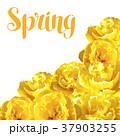 フラワー 花 チューリップのイラスト 37903255
