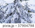 雪 積雪 雪景色の写真 37904798