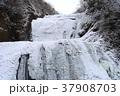 袋田の滝 氷瀑 冬の写真 37908703