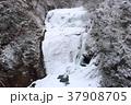 袋田の滝 氷瀑 冬の写真 37908705