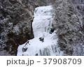 袋田の滝 氷瀑 冬の写真 37908709