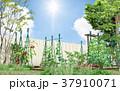 菜園 家庭菜園 畑のイラスト 37910071