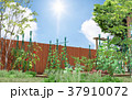 菜園 家庭菜園 畑のイラスト 37910072