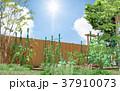 菜園 家庭菜園 畑のイラスト 37910073