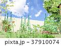 菜園 家庭菜園 畑のイラスト 37910074