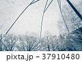 雪 雪の日 傘の写真 37910480