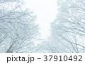 雪 森林 雪の日の写真 37910492
