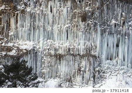 白川氷柱群 長野県木曽町 37911418