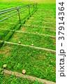 荒川土手の階段の風景 37914364