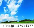荒川土手と青空の風景(都市農業公園付近) 37914377