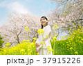 女性 桜 染井吉野の写真 37915226
