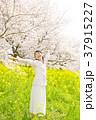 桜 女性 菜の花の写真 37915227