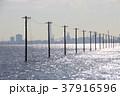 冬の江川海岸にて 37916596