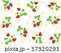 苺 果物 果実のイラスト 37920293