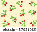 苺 果物 果実のイラスト 37921085