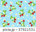 苺 果物 果実のイラスト 37921531