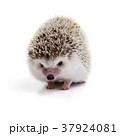 37924081