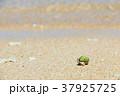 沖縄 波照間島のヤドカリ 37925725