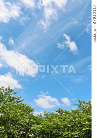 夏の青空と公園の木々 37930117