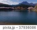 サクラ咲く宇都宮森林公園と古賀志山 37936086