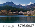 サクラ咲く宇都宮森林公園と古賀志山 37936087