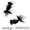金魚 魚 背景のイラスト 37937270