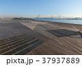 大桟橋 大さん橋 横浜港の写真 37937889