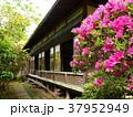 古家の軒下に咲くツツジ 37952949