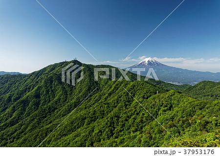 本社ヶ丸稜線から見る新緑の三ツ峠と残雪の富士山 37953176