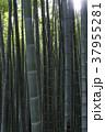 自然 植物 竹の写真 37955281