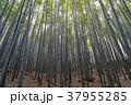 自然 植物 竹の写真 37955285