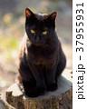 切り株の上の黒猫 37955931