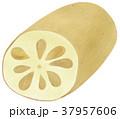 手描き 食べ物 野菜のイラスト 37957606
