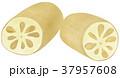 手描き 食べ物 野菜のイラスト 37957608